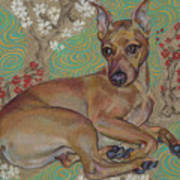 Mini-pinscher Art Print