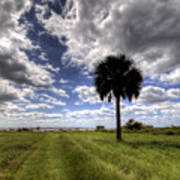 Fort Moultrie Palm  Art Print