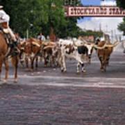 Fort Worth Cattle Drive Art Print