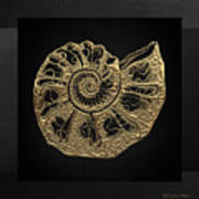 Fossil Record - Golden Ammonite Fossil On Square Black Canvas #4 Art Print
