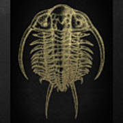 Fossil Record - Golden Trilobite On Black No.2 Art Print
