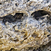 Fossil Rock Abstract - Eyes Art Print