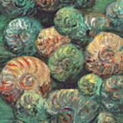 Fossil Shells Art Print