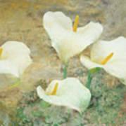 Four Lilies Art Print
