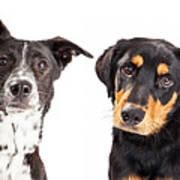Four Mixed Breed Dogs Closeup Art Print