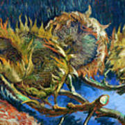 Four Sunflowers Gone To Seed, By Vincent Van Gogh, 1887, Kroller Art Print