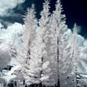 Four Tropical Pines Infrared Art Print