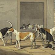 Fox Hounds Art Print