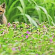 Fox In The Garden Art Print