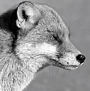 Fox - Mono Art Print