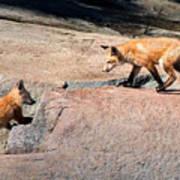Red Fox Playtime Art Print