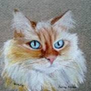 Foxey Art Print