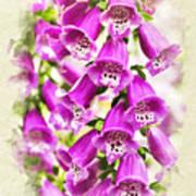 Foxglove Flowers Blank Note Card Art Print