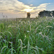 Foxtail Grasses In Glacial Park Art Print