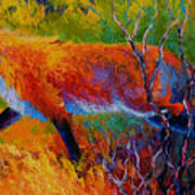 Foxy - Red Fox Art Print by Marion Rose