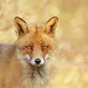 Foxy Faces Series- That Look Art Print