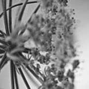 Fractal Flower Photoset 03 Art Print