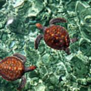 Fragile Underwater World. Sea Turtles In A Crystal Water. Maldives Art Print