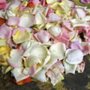 France Flower Petals, Still-life Art Print