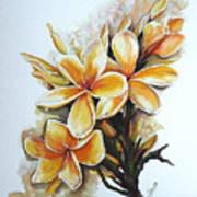 Frangipangi   Sold Art Print