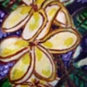 Frangipani In The Tropics  Series 1 Art Print