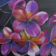 Frangipani  Art Print