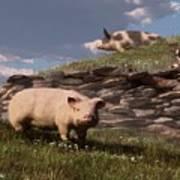 Free Range Pigs Art Print