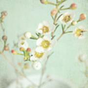 Freesia Blossom Art Print