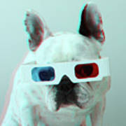 French Bulldog With 3d Glasses Art Print