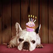 French Bulldog With Birthday Cupcake Art Print by Retales Botijero