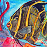 French Kiss-juvenile French Angelfish Art Print by Kelly     ZumBerge