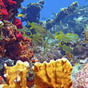 French Reef 1 Art Print