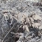 Fresh Coat Of Snow Art Print