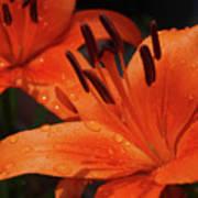 Fresh Floral Delight Art Print