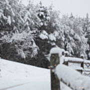 Fresh Snowfall Art Print