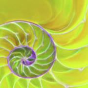 Fresh Spiral Art Print