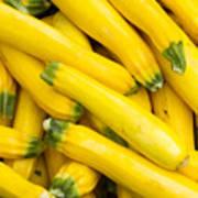 Fresh Yellow Squash  Art Print