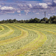 Freshly Mown Hay  Art Print