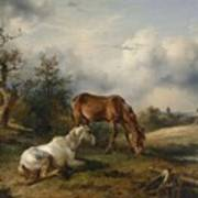 Friedrich Gauermann A Grey And A Chestnut In The Pasture  1825 Art Print