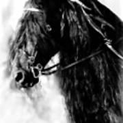 Friesian Horse Beauty Art Print