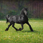Friesian Power Art Print