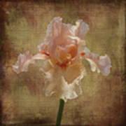 Frilly Iris Art Print