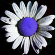 Fringe - Blue Flower Art Print