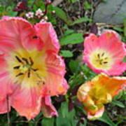 Fringed Tulips Art Print