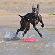Frisbee On The Beach Art Print