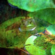 Frog And Lily Pad 3076 Idp_2 Art Print