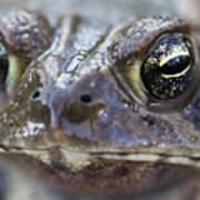 Frog Eyed Art Print