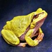 Frog - Id 16236-105000-7516 Art Print