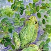 Frog In The Pond Art Print