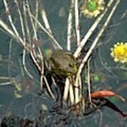 Frog On A Stick Art Print